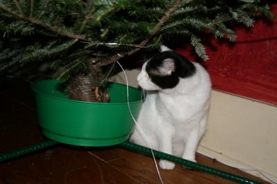 Dude Christmas 2010