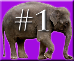 The Four Ignored Elephants of Quality in the Classroom & Teacher Retention